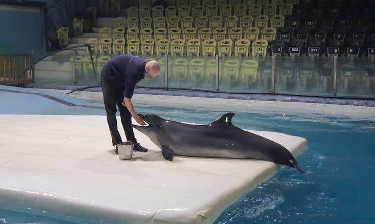 kasya-la-delfina