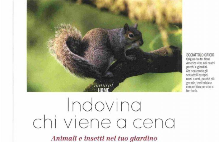 Natural style di agosto ha chiesto a Massimo Vacchetta come soccorrere un riccio
